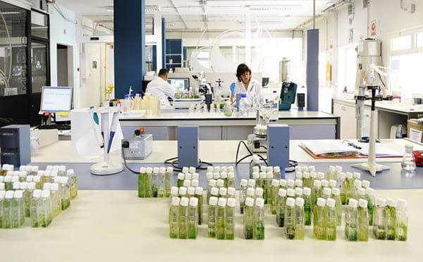 La Universidad de Las Palmas publica un estudio sobre los beneficios de la espirulina